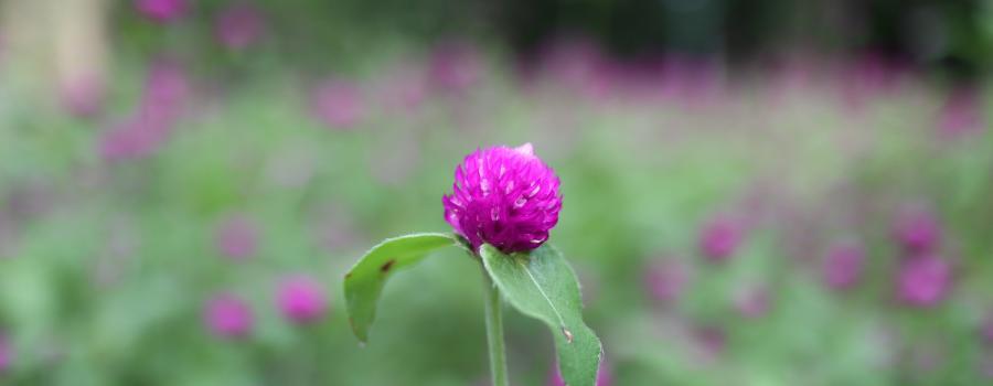 越秀之小花