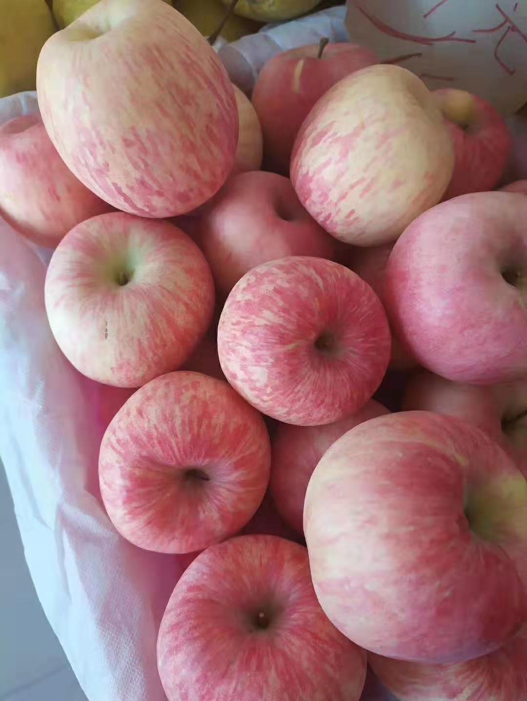 甘肃庆阳红富士苹果