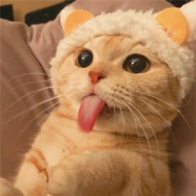 2020最可爱卖萌小猫咪头像