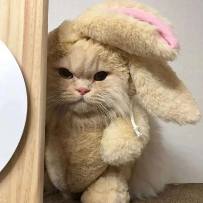 超级可爱的萌萌猫咪头像