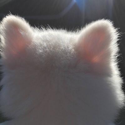 夏季专用的可爱小猫咪头像精选